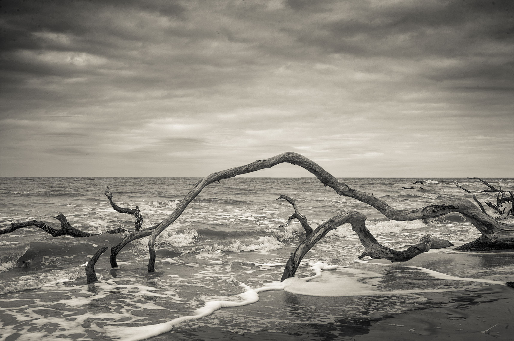Photography, Photo Illustration and Retouching on Driftwood-Beach_Jekyll-Isle-SC_11x17-